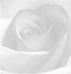 Rose-grey
